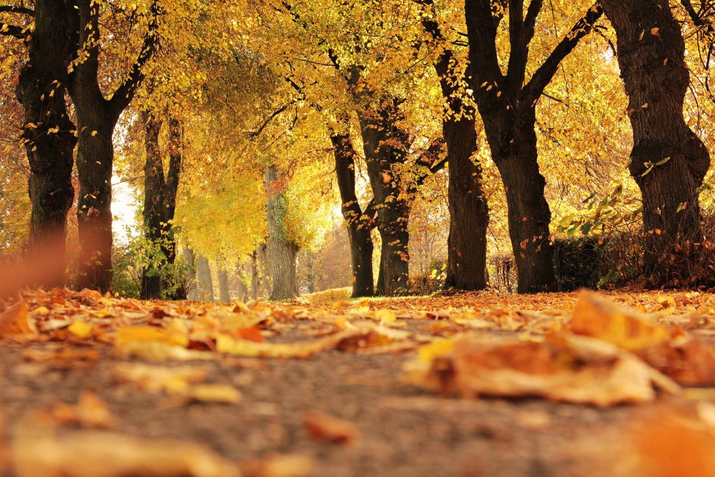 5 Simple Ways To Mentally Refresh This Fall